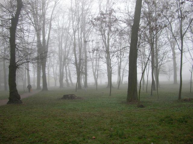 pogoda, mgła, człowiek, drzewa