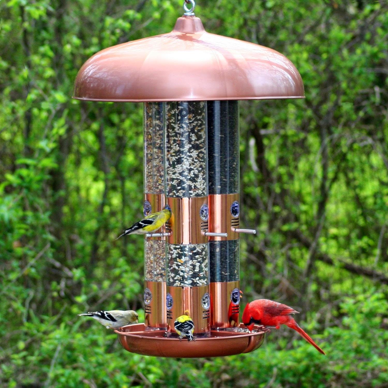تغذية الطيور,طيور,امازن, الحسون