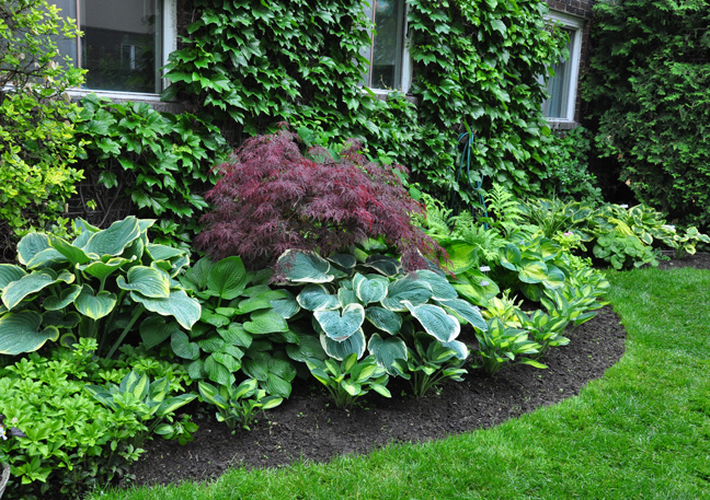 Shade Landscaping Ideas Zone 6 : Three dogs in a garden hostas have some of the best names