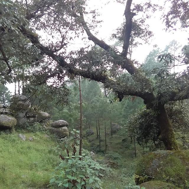 lansdowne, trekking , hill , hill station