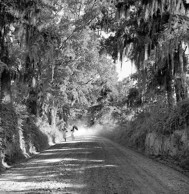 a Marion Post Wolcott photograph, 1940 country road, Spanish moss