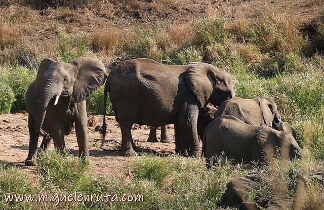 Elefantes-Lower-Sabie-safari-Kruger
