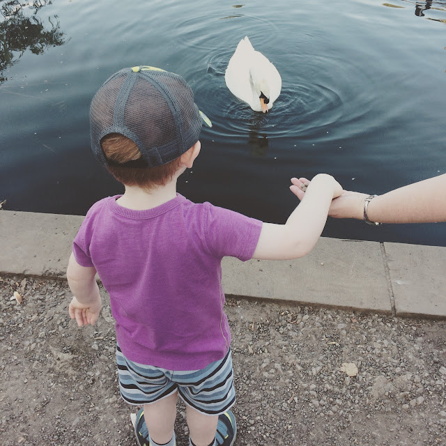 Little boy looking at the ducks