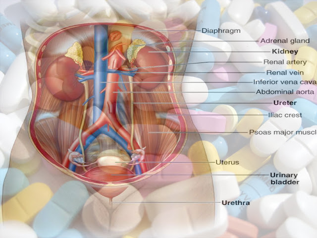 Obat Yang Mempengaruhi Saluran Kemih, infeksi saluran kemih  infeksi kandung kemih  kandung kemih  infeksi  obat infeksi saluran kemih  infeksi saluran kemih pada wanita  penyakit infeksi  pengobatan infeksi saluran kemih  obat infeksi saluran kemih pada wanita  obat tradisional infeksi saluran kemih  infeksi kandung kemih pada wanita  obat herbal infeksi saluran kemih  penyakit infeksi saluran kemih  penyakit kandung kemih  obat infeksi kandung kemih  obat isk  penyakit isk  infeksi saluran kandung kemih  cara mengobati infeksi saluran kemih  obat infeksi  terapi infeksi saluran kemih  antibiotik infeksi saluran kemih  obat untuk infeksi kandung kemih  batu saluran kemih  obat untuk infeksi saluran kemih  cara mengobati infeksi kandung kemih  patofisiologi infeksi saluran kemih  saluran kandung kemih  antibiotik untuk infeksi saluran kemih  saluran air