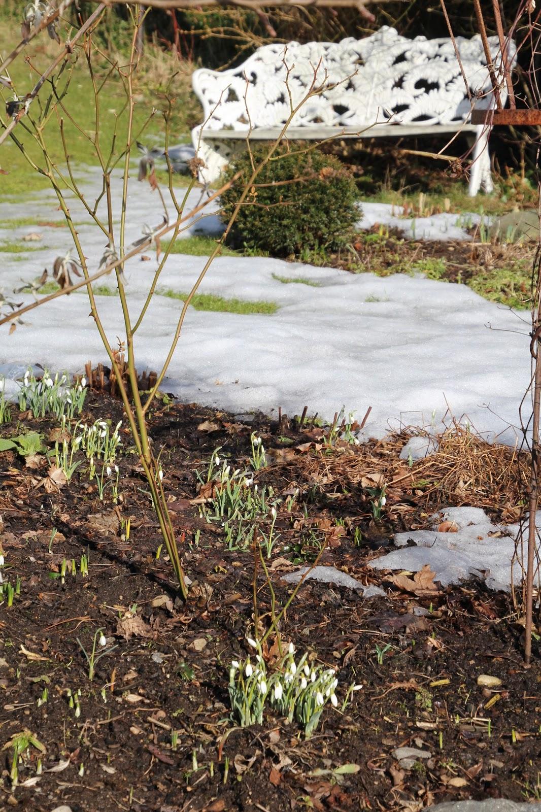 trädgårdsblogg