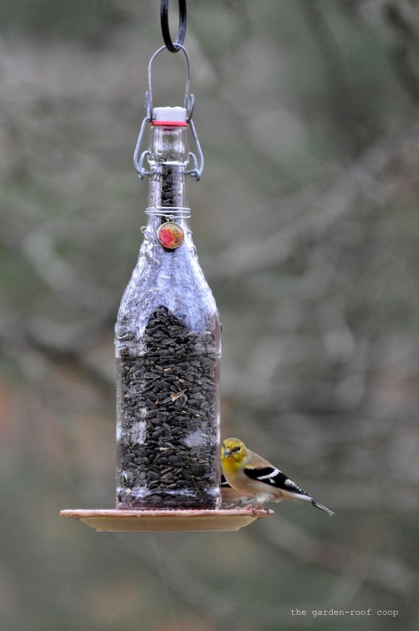 The Garden Roof Coop Diy Wine Bottle Bird Feeders