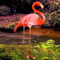 Wowescape Flamingo Forest Escape