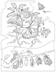 Butterfly Habbitat Coloring Pages For Kids Free Download