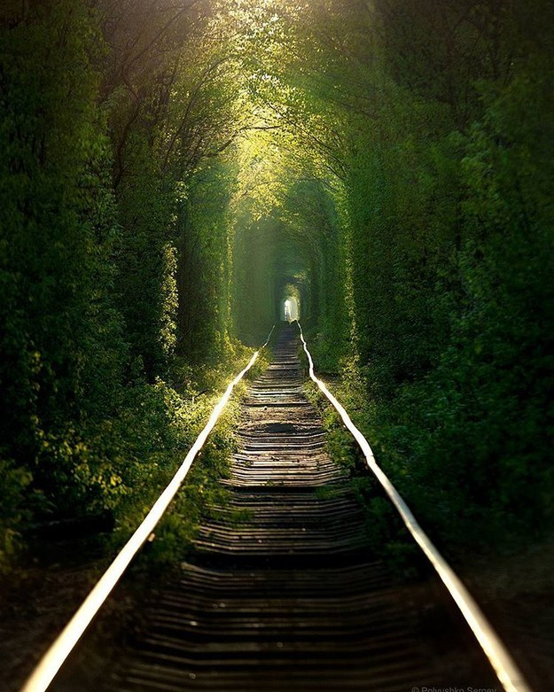 "17 Real Places That Are Probably Portals To The Wizarding World - ""Tunnel of Love"" in Klevan, Ukraine"
