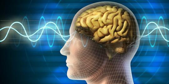 http://4.bp.blogspot.com/-A1M5fOWSUhE/UVZah7xsEHI/AAAAAAAAAKs/5Wdf61zO50M/s640/10-fakta-menarik-tentang-otak-manusia.jpg