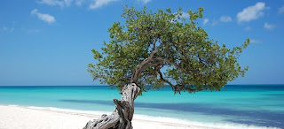 AMERICA: Aruba 9