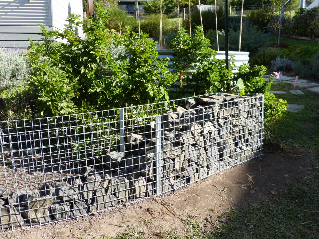 Silverbeet Simplicity: Our curved gabion wall (mock!)