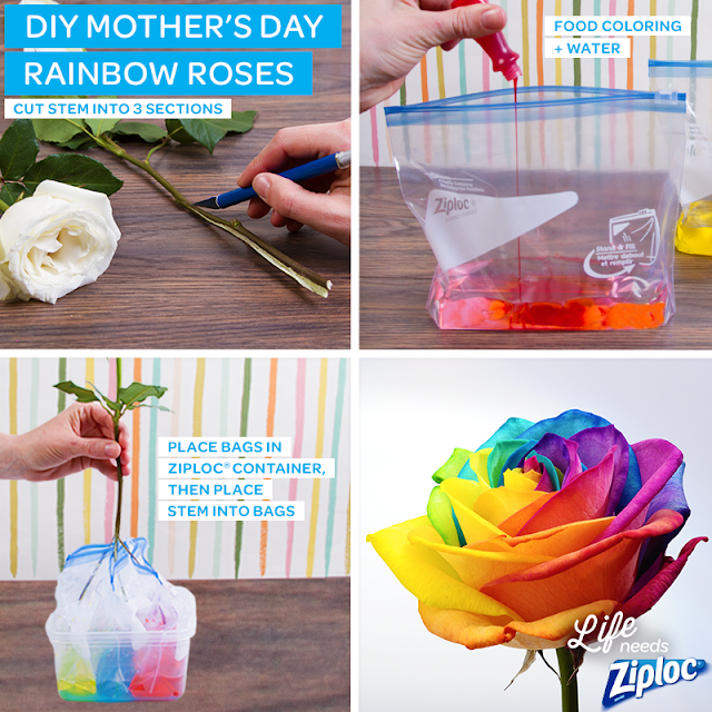 How to make and dye rainbow roses.