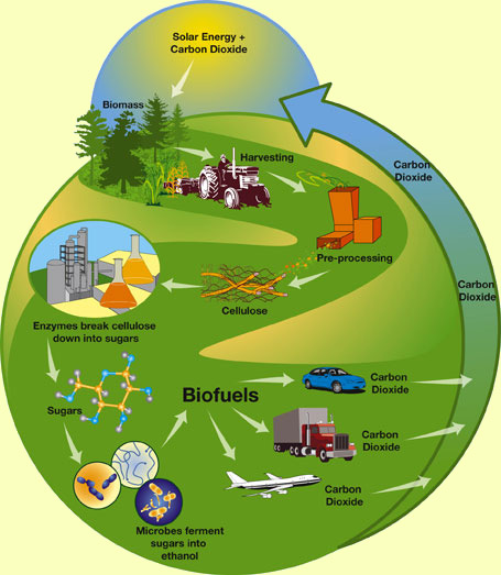 world biofuel day current affair prepare ias biofuels are energy sources made from living things or the waste that living things produce supporters of biofuels argue that their use could