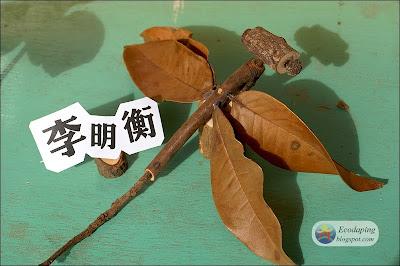 大坪森林: 兒童木工─樹枝蟲創作