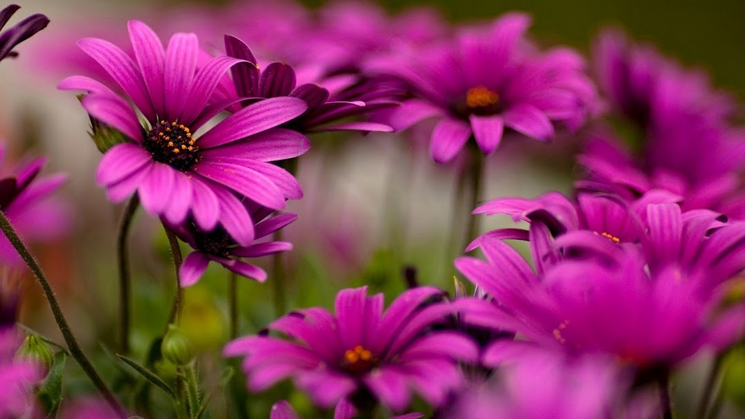 Flowers Macro HD Wallpaper 8