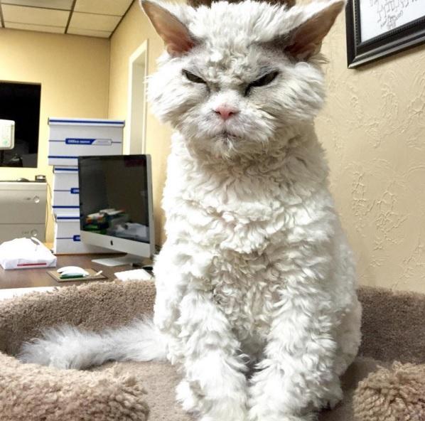 Meow Berwajah Gangster Abang Kawasan Ini Miliki 93.7K Followers Di Instagram