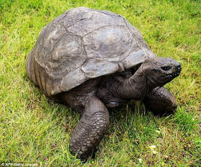 This Giant Tortoise Is World's Oldest Living Land Animal At 186