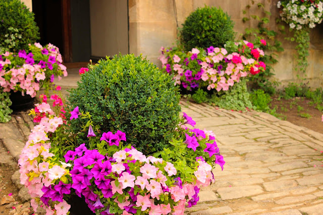 Potted Flowers & Topiary | Lacock |  England | Chichi Mary Blog