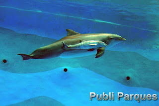 primer delfín por inseminación artificial en España