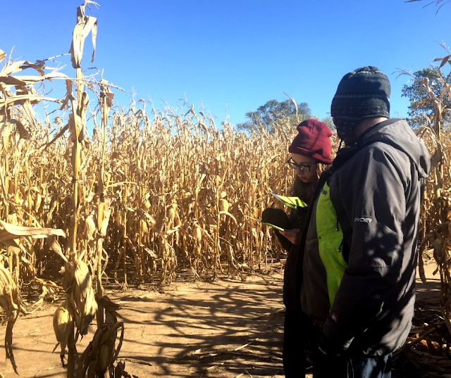 Checking out the map to navigate Skelly's Corn Maze.