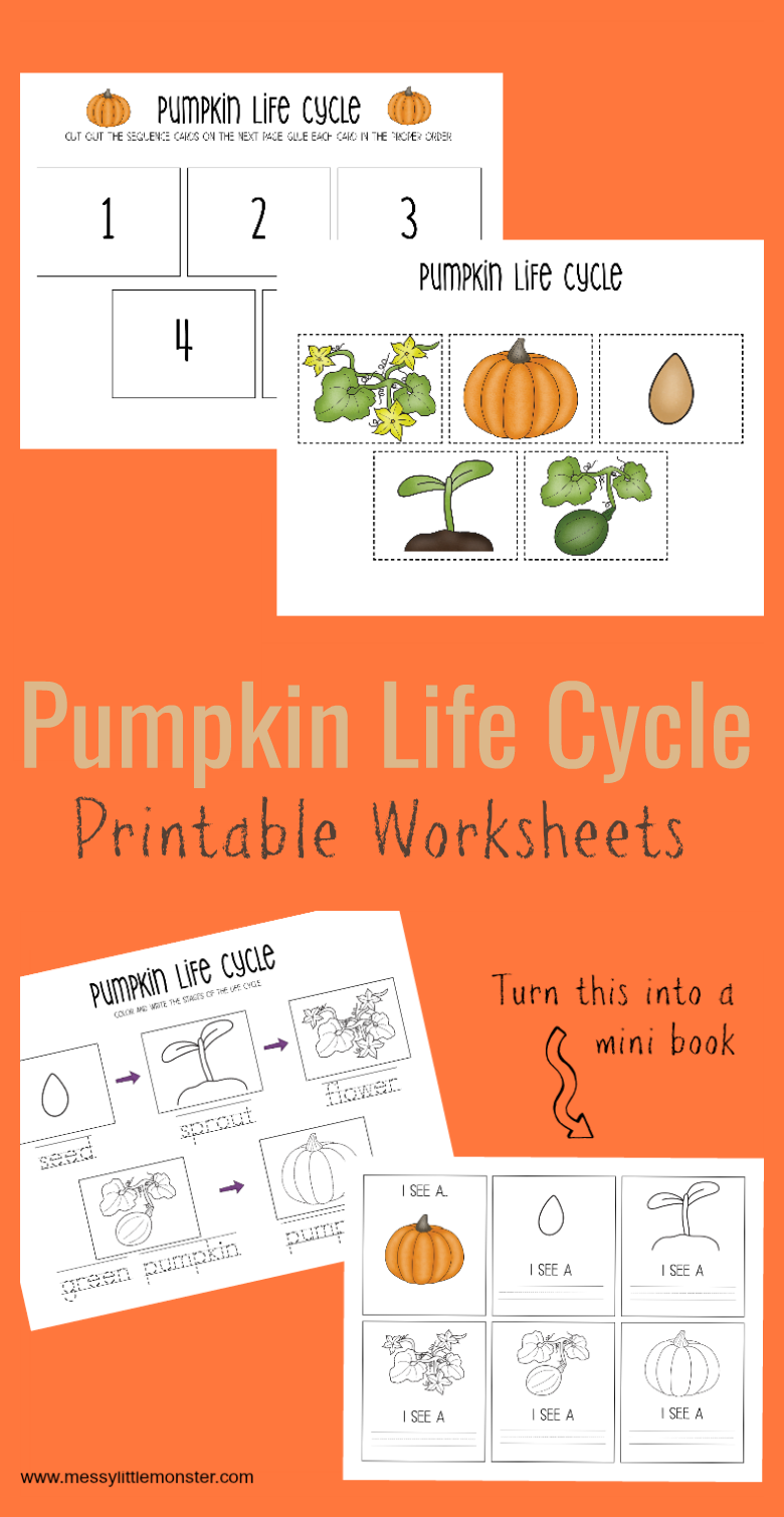 use this set of pumpkin life cycle printable worksheets to teach young children where pumpkins come [ 780 x 1509 Pixel ]