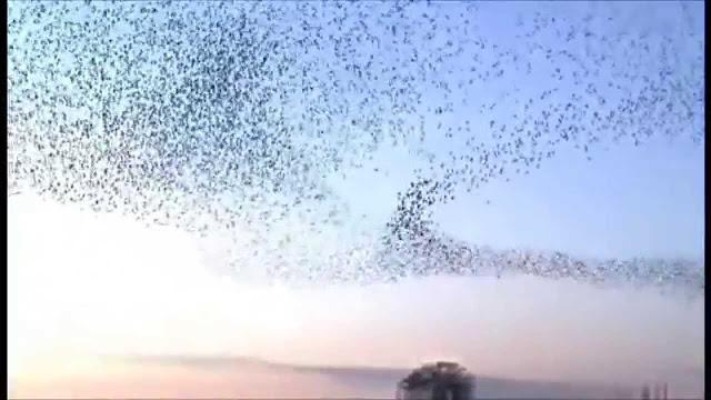 الهجرة عند الطيور
