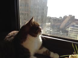 gatos subindo na janela