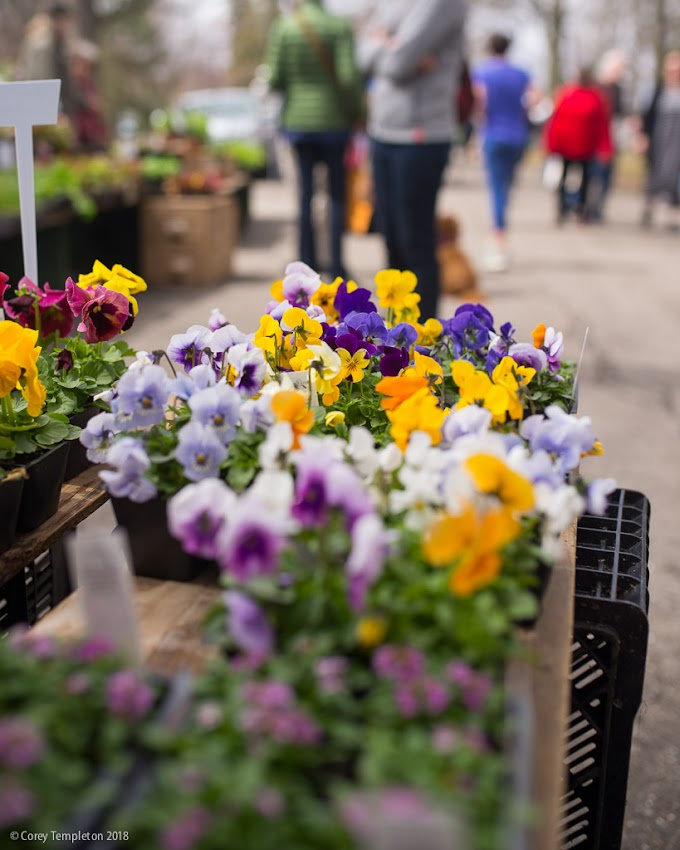 Portland, Maine USA April 2018 photo by Corey Templeton. A nice stroll through the first outdoor season Portland Maine Farmers' Market in Deering Oaks Park today.