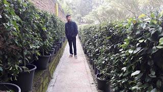 D' Ranch Bandung 4
