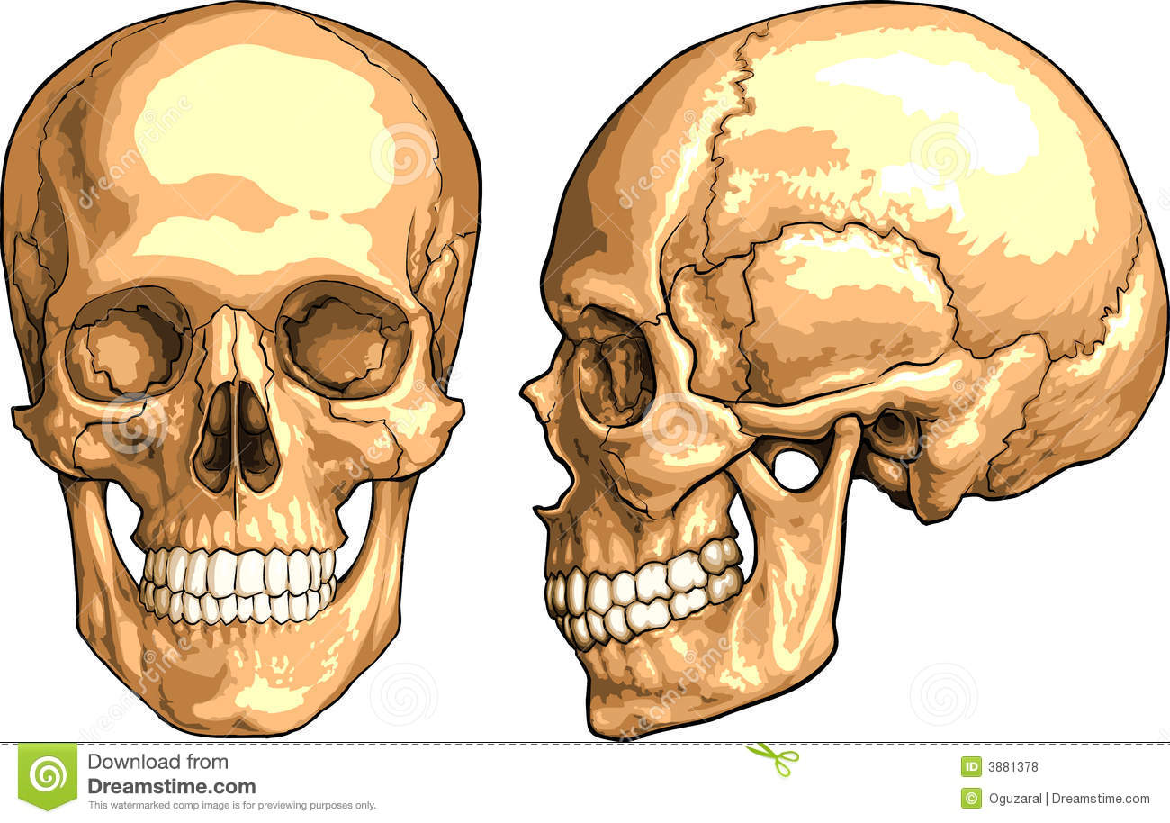 Medical books pdf: Skull Anatomy (1 of 5): Superior ...