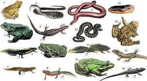 Sürüngen hayvanların özellikleri