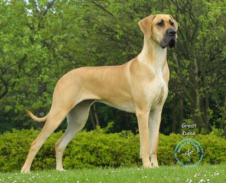 أسعار وانواع الكلاب المعروفة في مصر بالصور