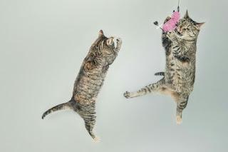 Cara Membuat Mainan Kucing di rumah