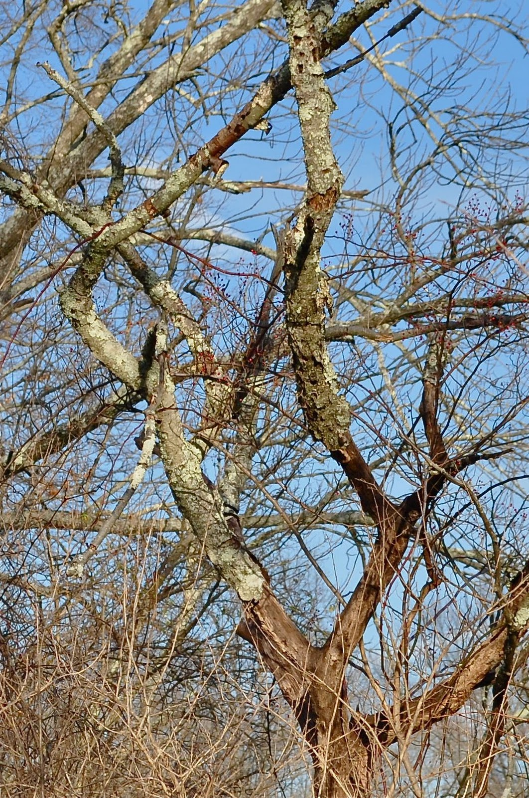 Harvard Forest: Wit's End: Harvard Forest Being Eaten Alive By Ravenous