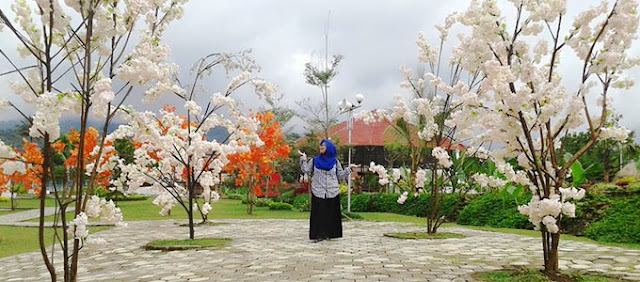 Bunga sakura Small World Purwokerto