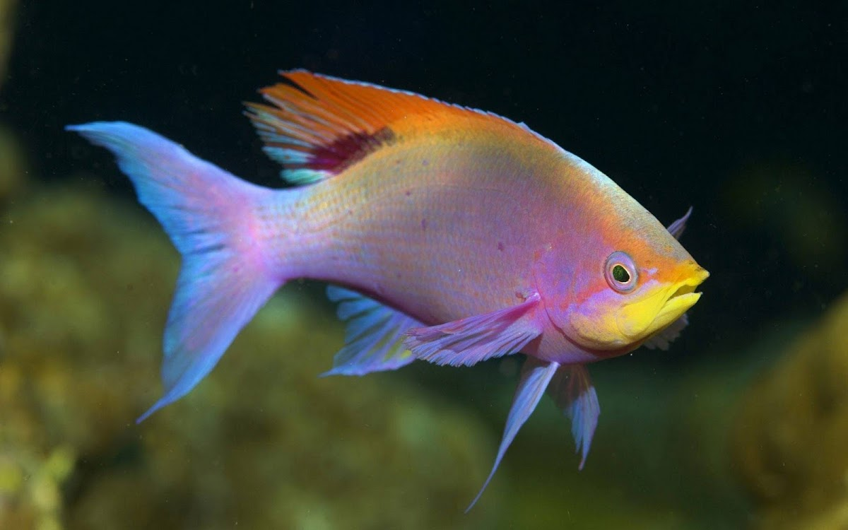 Multi Color Fish Widescreen HD Wallpaper