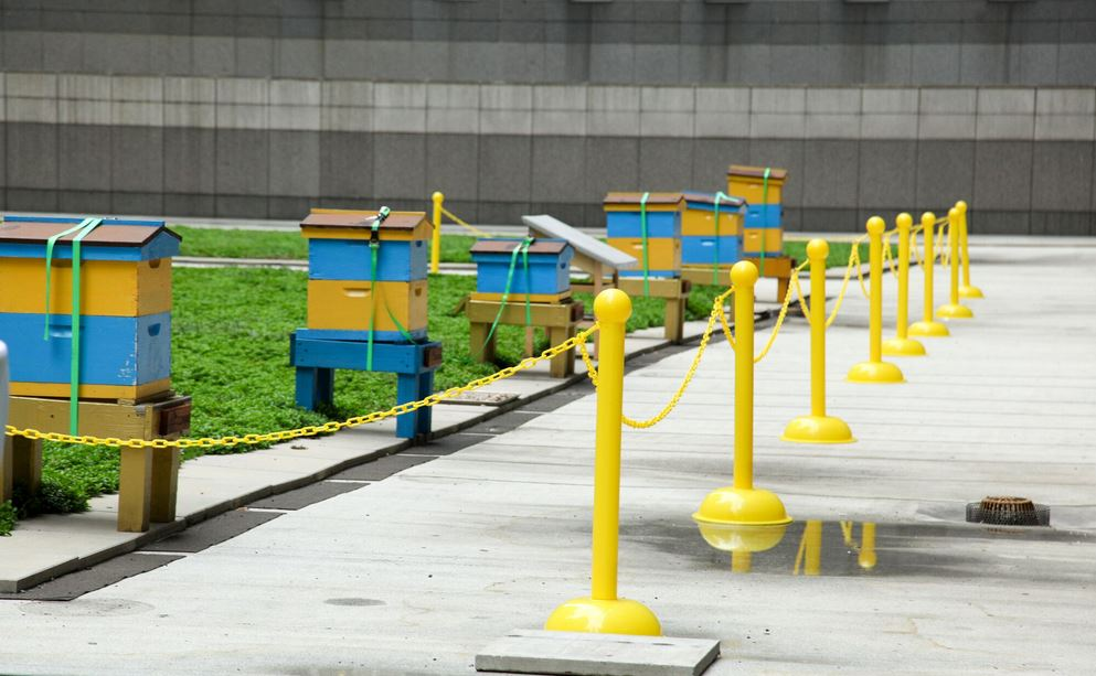 New beehives at the new York Hilton midtown rooftop