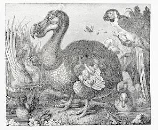 burung dodo dialam liar