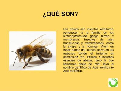 que son las abejas