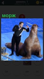 около водоема на берегу морж и мужчина, который его дрессирует