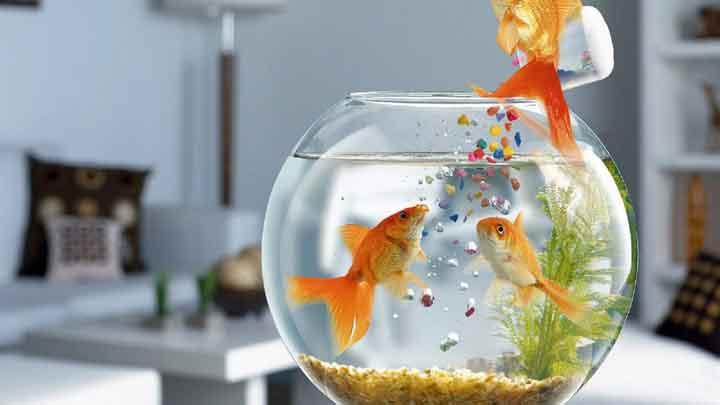 akvaryumda balık resimleri