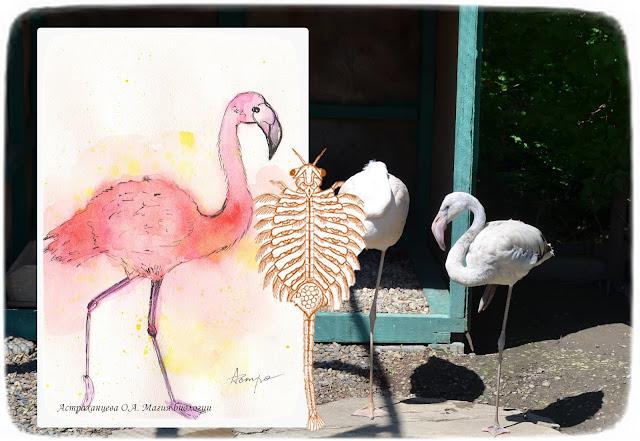 фламинго-рачок-артемия-акварель