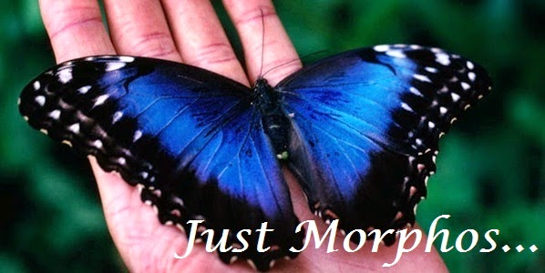 JuSt mOrPhOs....!!!