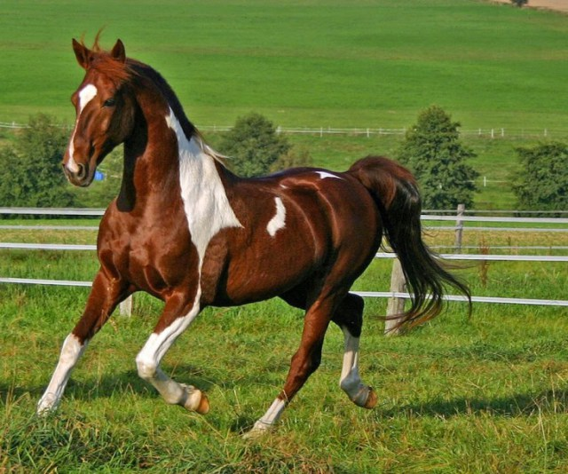 Τα ποιό σπάνια και όμορφα άλογα που έχετε δει στην ζωή σας!