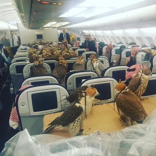 Pangeran Arab Saudi Beli Tiket Pesawat Untuk 80 Burung Elang Miliknya. Bener Gak, Sih?