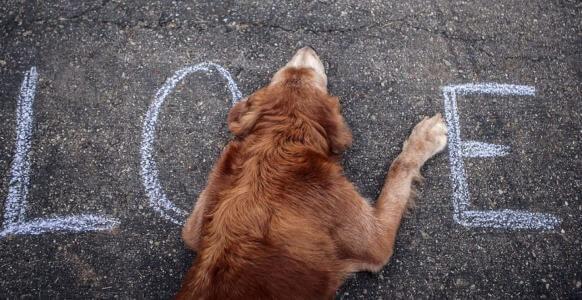 Perro callejero acostado en el asfalto