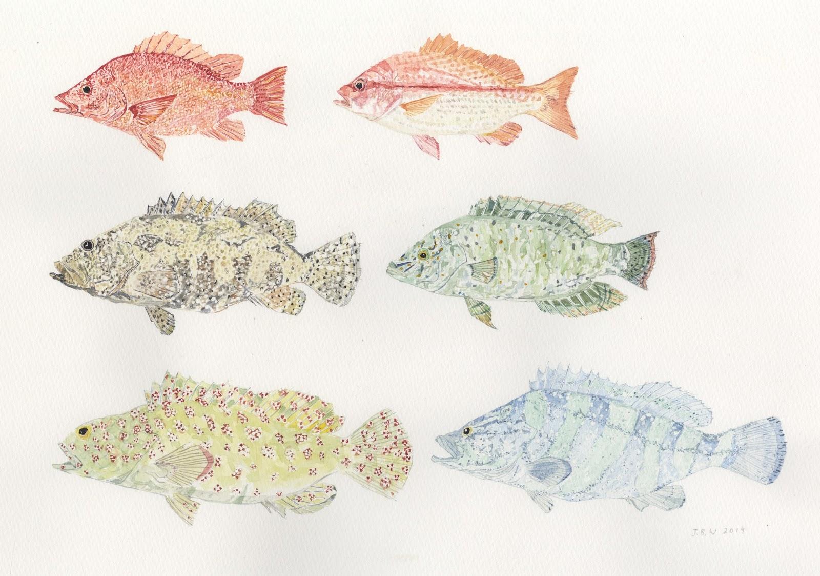 Pescadotes October 2014