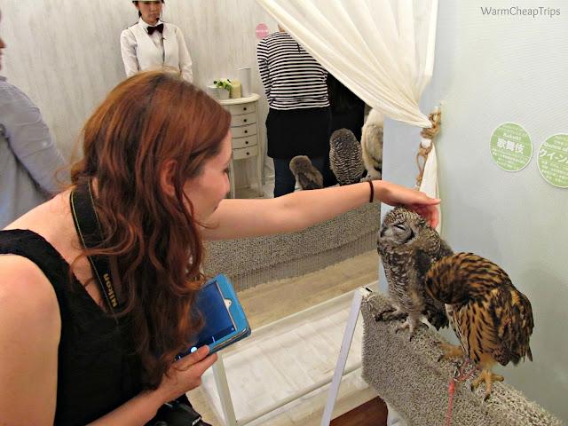owl cafè, civette a tokyo, baer civette, attività strane a tokyo, accarezzare una civetta, coccolare le civette, incontrare civette, civette
