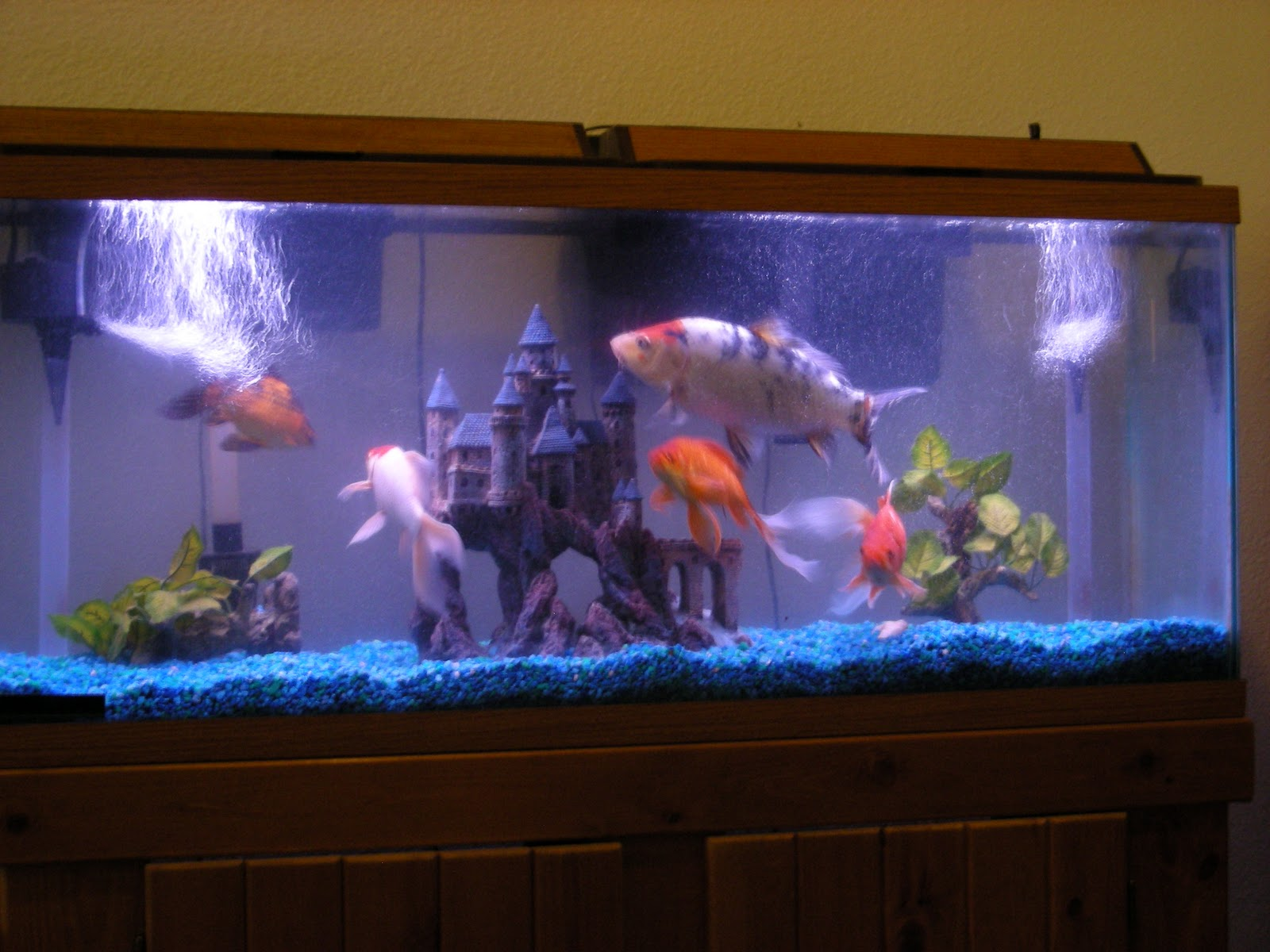 55 Gallon (210 liter) fishtank with wooden stand and some basic